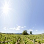 penticton_vineyard_tall400kb