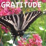 butterfly gratitude