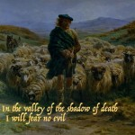 sheep shepherd no fear