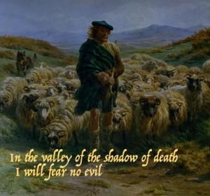sheep shepherd no fear