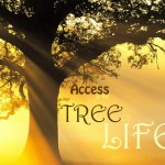 access tree of life2