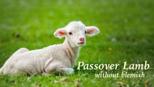 Passover lamb without blemish3